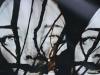 La Ronda dell'Arte # 6 | Forte Mezzacapo (Zelarino - Venezia)