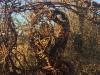La Ronda dell'Arte # 8 | Forte Mezzacapo (Zelarino - Venezia)